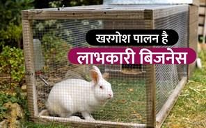खरगोश पालन बिजनेस के जरिए सालाना कमाएं 10 लाख रुपए, जानिए कैसे?