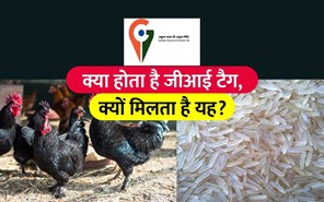 आखिर क्या होता है GI टैग,  कौन से भारतीय उत्पादों को मिला है जी.आई. टैग, जानिएं