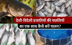 मिश्रित प्रजातियों का मछली पालन करके कमाएं मोटा मुनाफा, हर साल होगी लाखों की कमाई