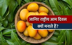 National Mango Day:  जानिए हर साल क्यों मनाते हैं राष्ट्रीय आम दिवस, साथ ही पढ़िए इससे जुड़े कुछ रोचक तथ्य
