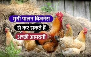 Poultry Farming Business:  मुर्गी पालन है एक लाभकारी बिजनेस, जानें कैसे शुरू करें?