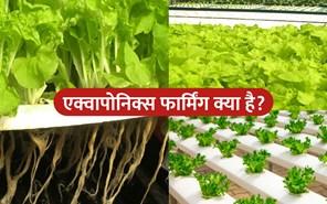 Aquaponics Farming : पानी की सतह पर उगाई जाएंगी सब्जियां, नीचे होगा मछली पालन
