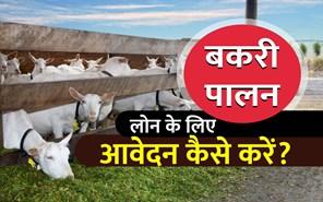 Goat Farming Business Loan: जानें, बकरी पालन करने के लिए लोन कैसे मिलता है?