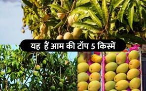 Top 5 Varities Of Mango: आम की टॉप 5 किस्में, जिनसे होगी किसानों की अच्छी कमाई