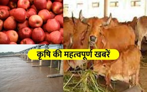 Top Agriculture News: बुंदेलखंड में बनेगा 3000 करोड़ रुपए में बैराज, जानिए कृषि से जुड़ी अन्य खबरें