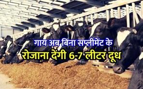Agriculture News: गाय अब बिना सप्लीमेंट के रोजाना देंगी 6-7 लीटर दूध, जानिए कृषि से संबंधित बड़ी खबरें