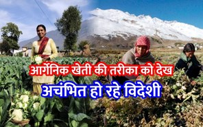 हिमाचल में आर्गेनिक खेती प्रक्रिया को देख अचंभित हो रहे विदेशी, सरकार दे रही बढ़ावा