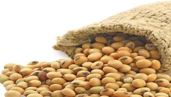 Secrets of concealing growing age of women: soybean