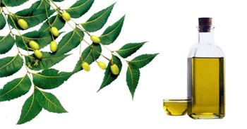 Neem oil rich in many medicinal properties, know its use in home