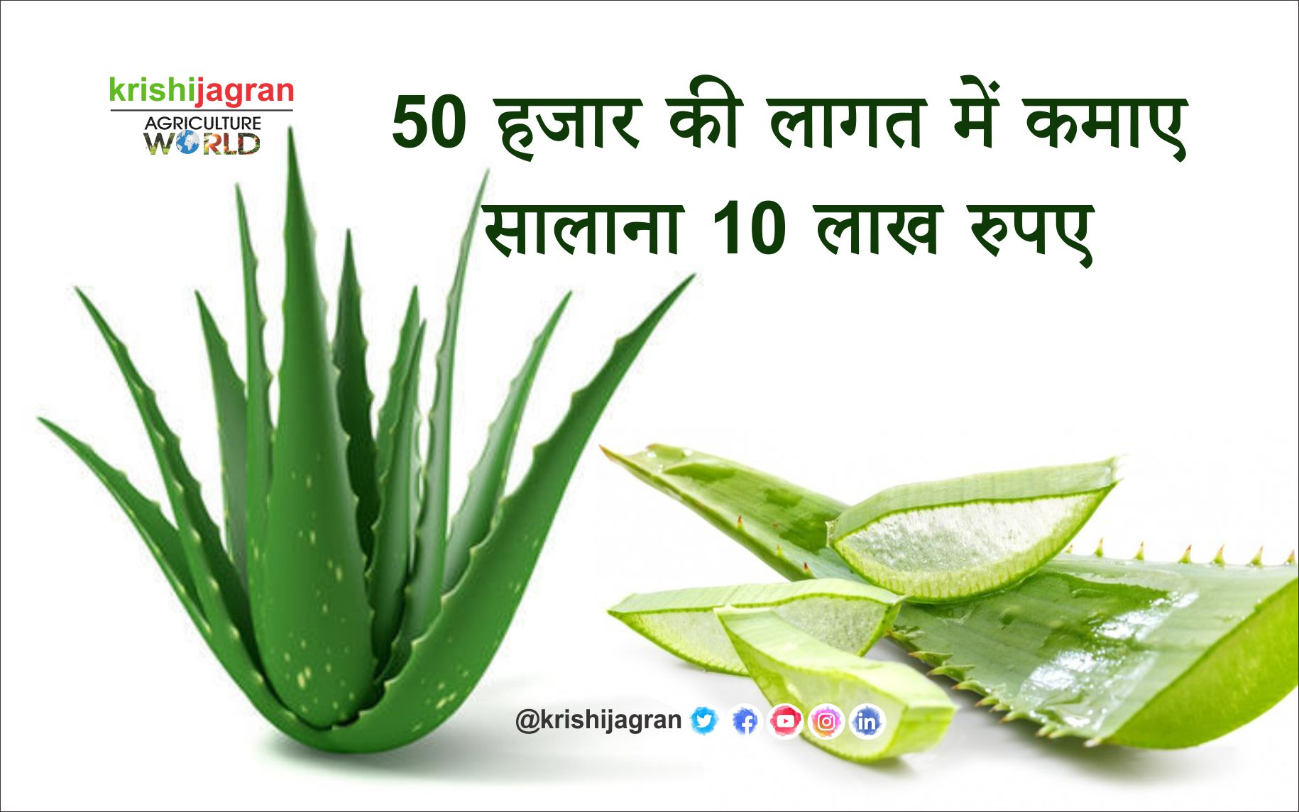 The cultivation of this medicinal plant earns Rs. 10 lakhs annually in the cost of 50 thousand rupees