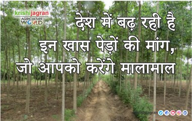 The demand of these special trees is increasing in the country, which will make you rich