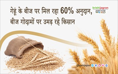 60% subsidy on wheat seed, farmers growing up on seed warehouses